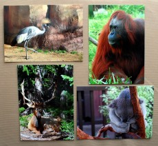 wildanimal postcardgroup (1)