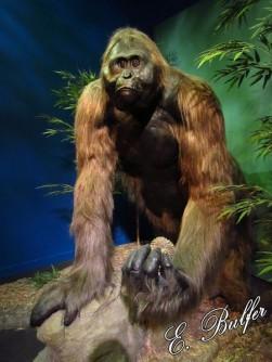 015 gigantopithecus2