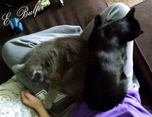 Both Cats Snuggling