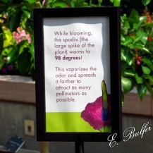 corpse flower sign2