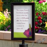corpse flower sign6