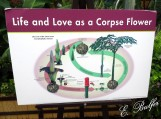 corpse flower sign7