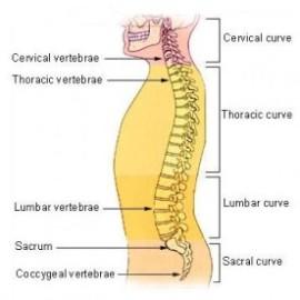 spinal_column-276x276