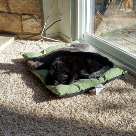 kitties-in-sunbeam-signed