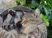 cat-2395102_1920