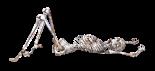 skeleton-1940281_1920