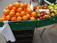 Oranges, apples, and pears in green bins, with plastic produce bags tied to the bins.